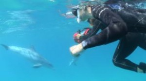 Dolphin Therapy shoot