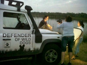 Kruger Park wild dogs shoot