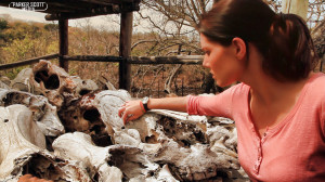 Pointing to a bullet hole in a rhino skull