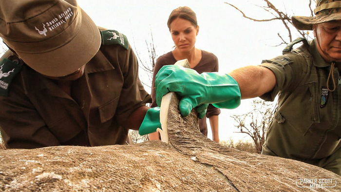 rhino-poaching-investigation